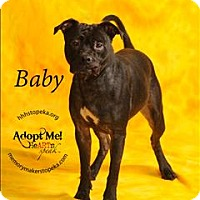 Adopt A Pet :: Baby - Topeka, KS