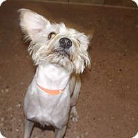 Adopt A Pet :: Scrappy Coco *Petsmart GB* - Appleton, WI