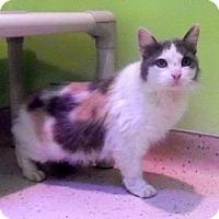 Adopt A Pet :: Mermaid - Janesville, WI