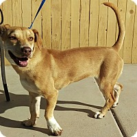 Adopt A Pet :: Twinkie - Apache Junction, AZ