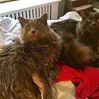 Adopt A Pet :: Fig & Rudy - Ardsley, NY