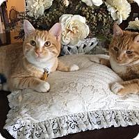 Adopt A Pet :: Sonny - Courtesy Posting - Gilbert, AZ