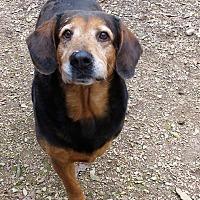 Adopt A Pet :: Moses DO - Manchester, NH