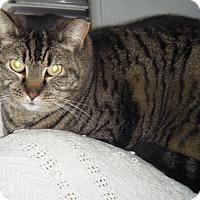 Adopt A Pet :: Coco - Kensington, MD