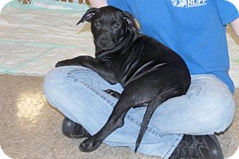 Terrier (Unknown Type, Medium) Mix Puppy for adoption in Minneola, Florida - Chip