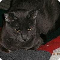 Adopt A Pet :: Anna - Temple, PA