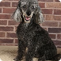 Adopt A Pet :: Gulliver - Henderson, NV