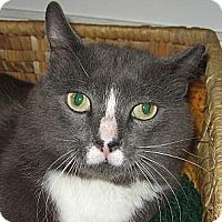 Adopt A Pet :: MUSTACHIO - 2013 - Hamilton, NJ