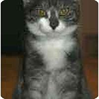 Adopt A Pet :: Renoir (& Picasso) - Arlington, VA