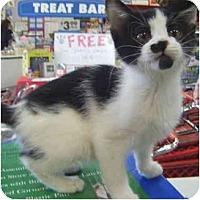 Adopt A Pet :: Tash - St. Louis, MO