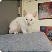 Adopt A Pet :: Mosquito - Milwaukee, WI