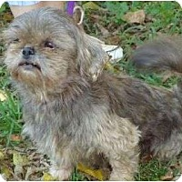 Adopt A Pet :: Millie - P, ME