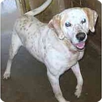 Adopt A Pet :: # 2 Freckles - RESCUED! - Alliance, OH