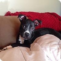 Adopt A Pet :: Darwin--pending  adoption - Lancaster, PA