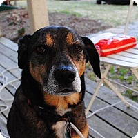Adopt A Pet :: Seth - Williston, VT