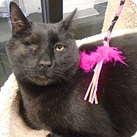 Adopt A Pet :: Charlie - Plainville, MA