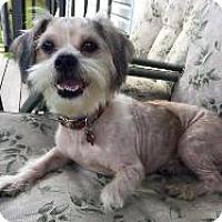 Adopt A Pet :: Biscuit - LEXINGTON, KY