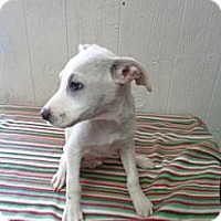 Adopt A Pet :: Mazy in CT - East Hartford, CT