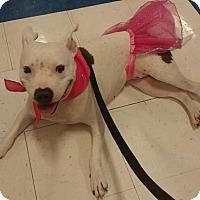 Adopt A Pet :: Marcia aka Jamie **ADOPTION PENDING** - Kenosha, WI