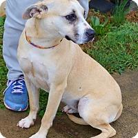 Adopt A Pet :: Harper - Boston, MA