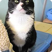 Adopt A Pet :: Gabby Bilko (Adoption Fee Waived!) - Broomall, PA