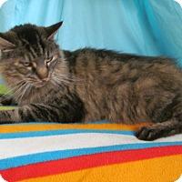Adopt A Pet :: Jasmine - Waldorf, MD