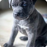 Adopt A Pet :: Hunt - Miami, FL