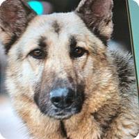 Adopt A Pet :: TROOPER  Von  TJARK - Los Angeles, CA