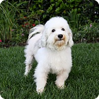 Adopt A Pet :: PALMER - Newport Beach, CA