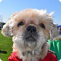 Adopt A Pet :: Apooh - Fairfield, OH