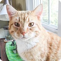 Adopt A Pet :: LT - Albany, NY