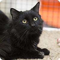 Adopt A Pet :: Slinky - Kettering, OH