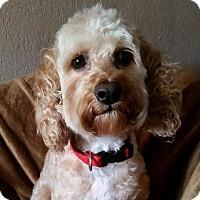 Adopt A Pet :: Milton Montgomery - Urbana, OH
