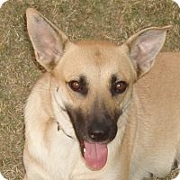 Adopt A Pet :: Millie - Dripping Springs, TX
