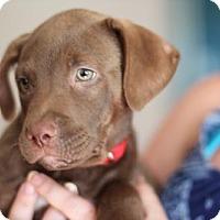 Adopt A Pet :: BBT - Morganville, NJ