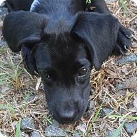 Adopt A Pet :: Hooper - Sparta, NJ