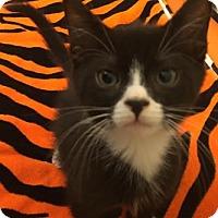 Adopt A Pet :: Pebble - New York, NY