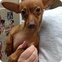 Adopt A Pet :: Maximilian - Centerville, GA