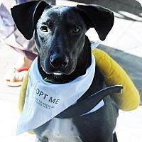 Adopt A Pet :: Hallie - Alexandria, VA