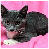 Adopt A Pet :: Meg - Forked River, NJ