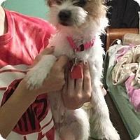 Adopt A Pet :: Pickles - Saddle Brook, NJ
