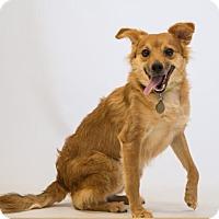 Adopt A Pet :: Prop Dog JAKE - Atlanta, GA