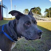 Adopt A Pet :: Wheez - Aiken, SC