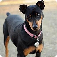 Adopt A Pet :: Nani - Newhall, CA