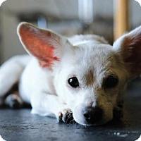 Adopt A Pet :: Blanco - Torrance, CA