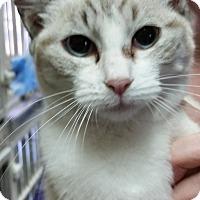 Adopt A Pet :: Topaz - Greenville, NC