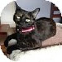 Adopt A Pet :: Antonia - Vancouver, BC