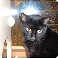 Adopt A Pet :: MILO - No.Charleston, SC