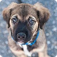 Adopt A Pet :: Dutchess - Reisterstown, MD