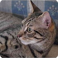 Adopt A Pet :: Luke - Manalapan, NJ